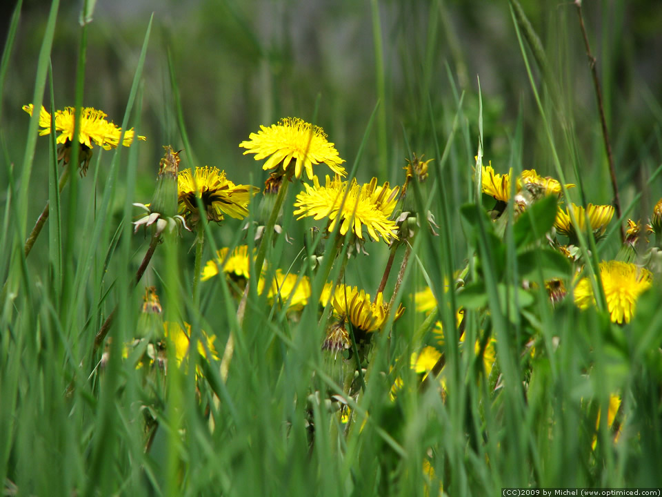 Grass with flowers for Grass like flowering plants